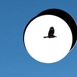 Photoshop 1: Freedom Bird